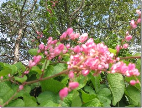 flowers 11-09 002