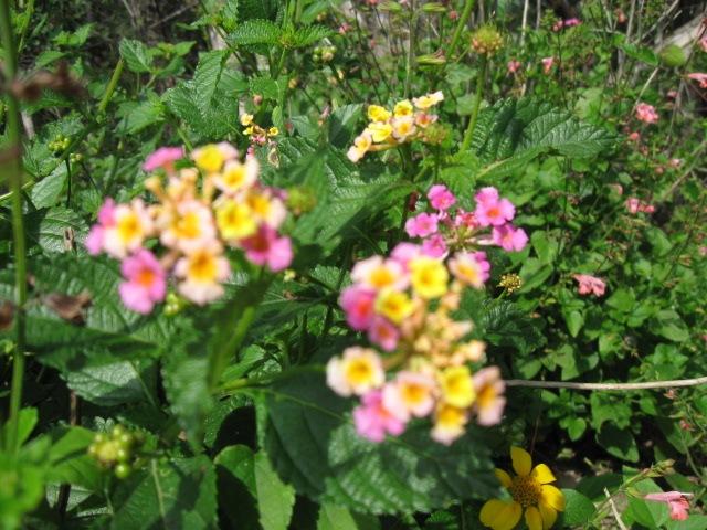 [flowers 11-09 007[4].jpg]