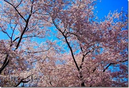 DC - Cherry Blossom Festival & Smithsonian 032