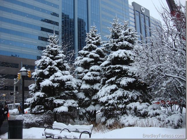 This is a photo of some snow covered evergreen trees outside the Newport Pavonia PATH station in New Jersey.