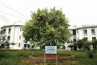 banyan-tree.thumbnail