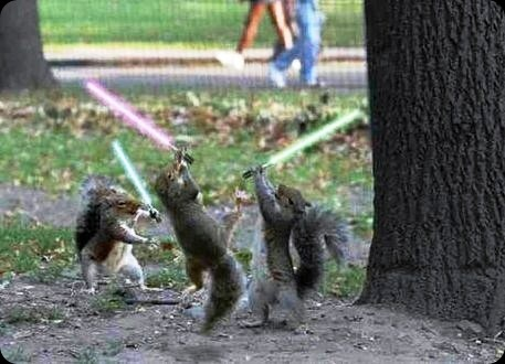 cool star wars photos jedi sith squirrels with light sabers