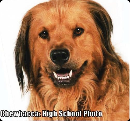 cool star wars photos chewbacca high school photo