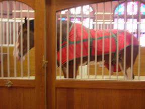 Budweiser-horse2-1.jpg