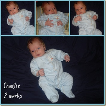 Charlie 2 wks collage