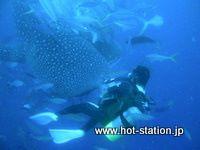 沖縄ダイビング ジンベイザメ