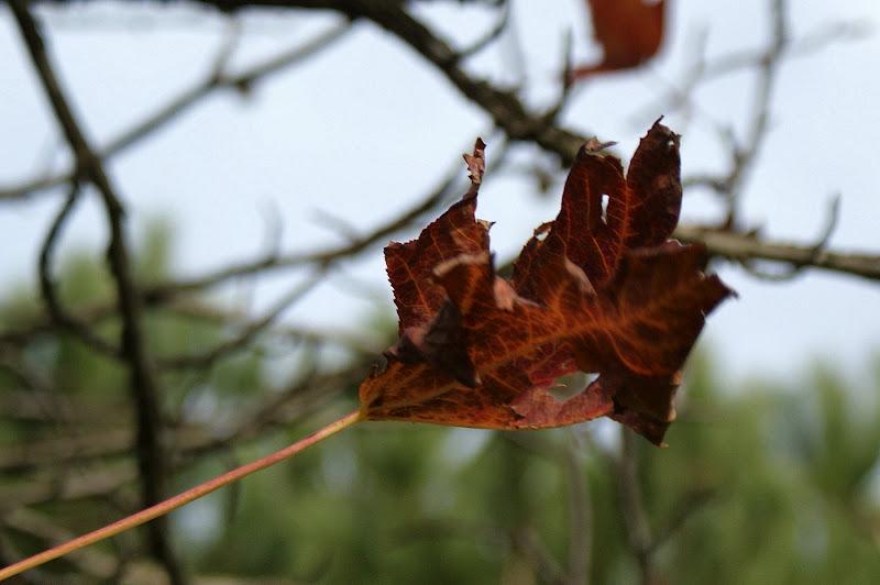 Folhas secas, Inverno