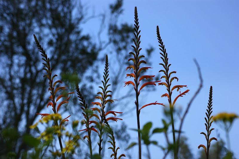 Flores da arrábida