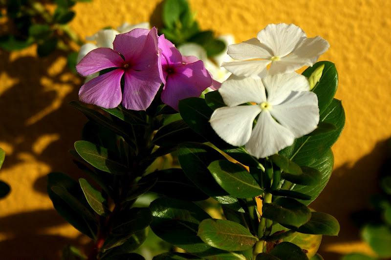 Flores simples e belas