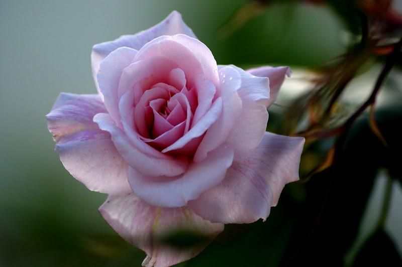 Pink cor de rosa