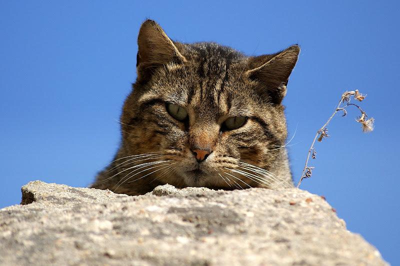O Gato Vinicius de Morais