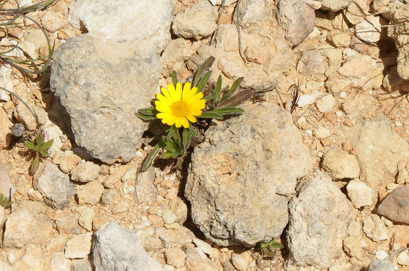 Flores do Algarve