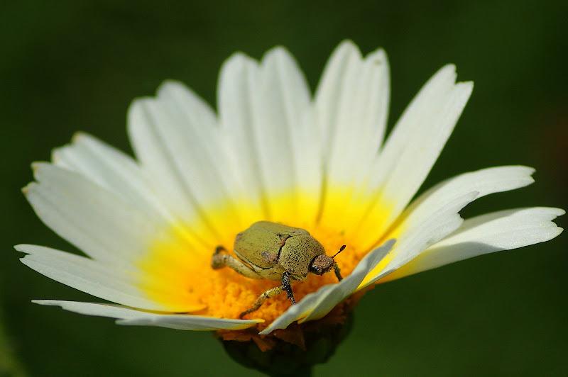 A flor e o bichinho