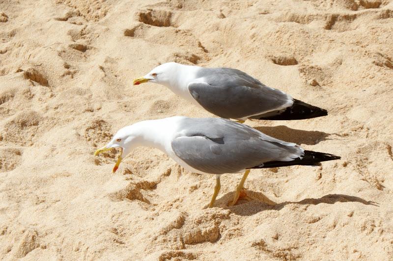 Gaivotas na areia