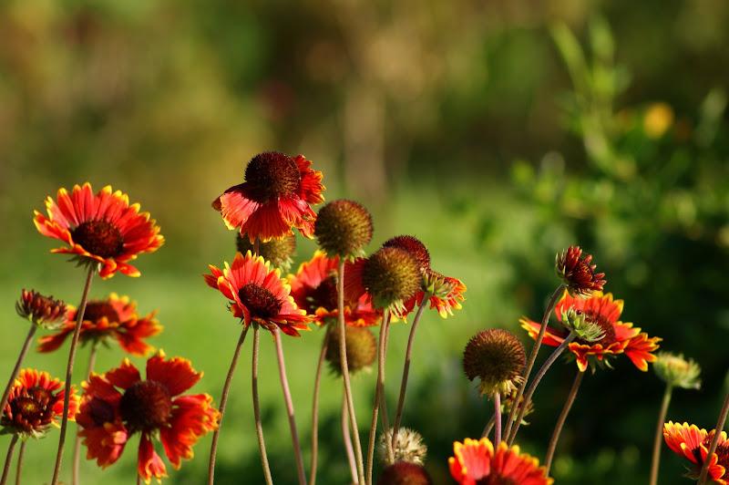 Flores de Maio no Jardim do Quebedo