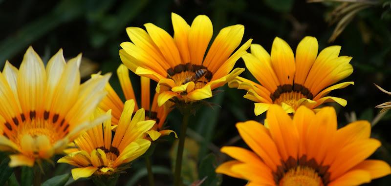 Cores com flores
