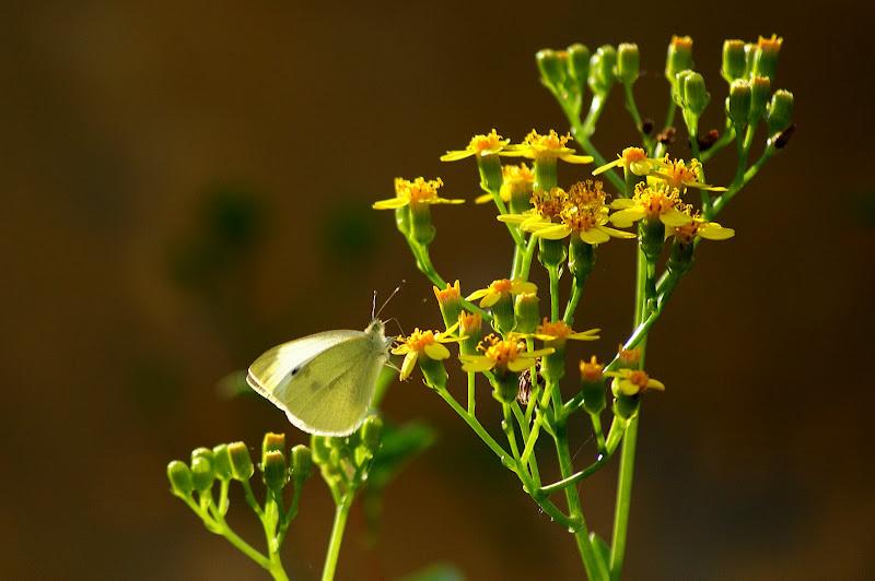 A vida é feita de coisas simples...borboleta