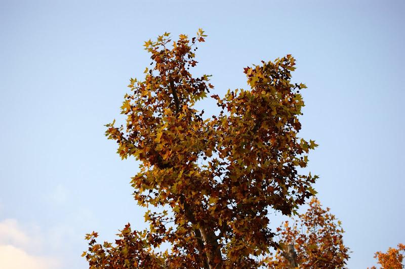 Outono no Jardim do Bonfim