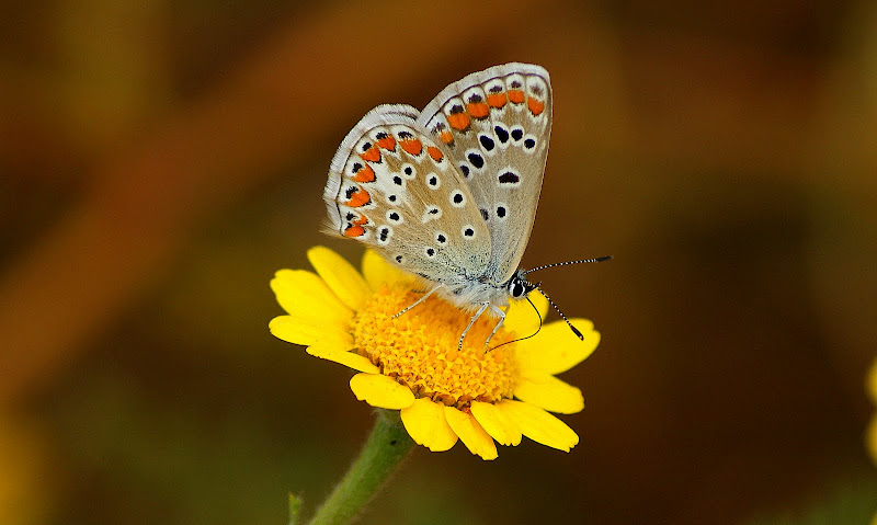 A pequena borboleta
