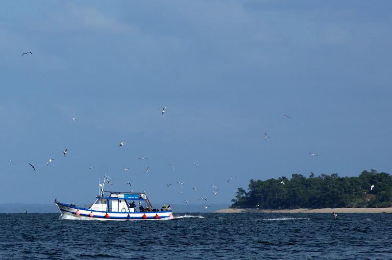 Praia de Albarquel, Traineira que chega da pesca