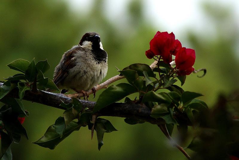 O Pássaro e as flores