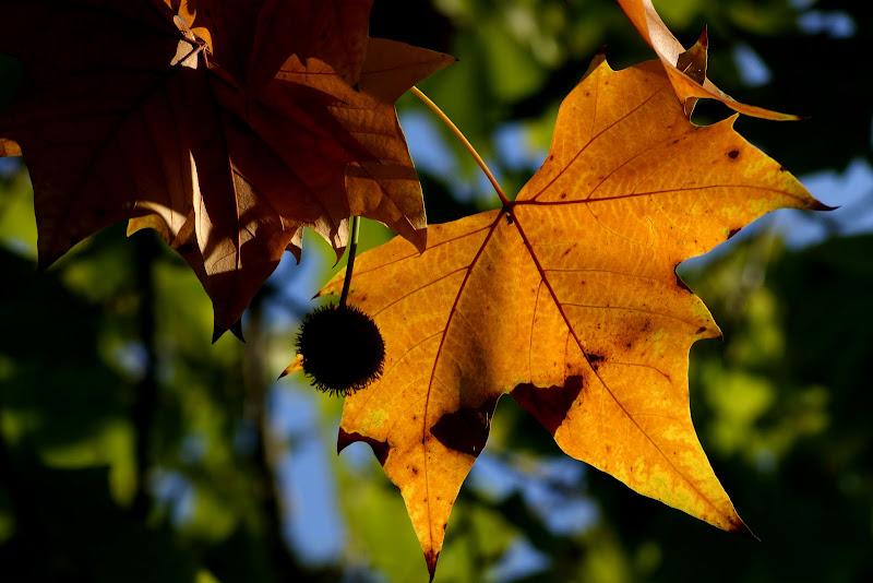 Outono e, Setúbal