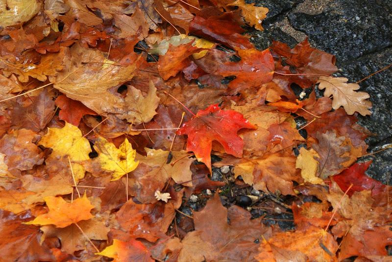 Folhas do Outono, Gerês