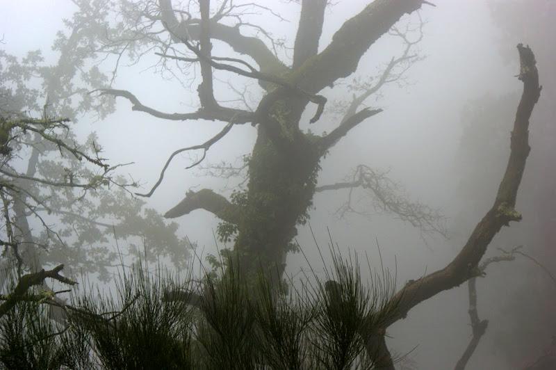 Nevoeiro no Outono do Gerês