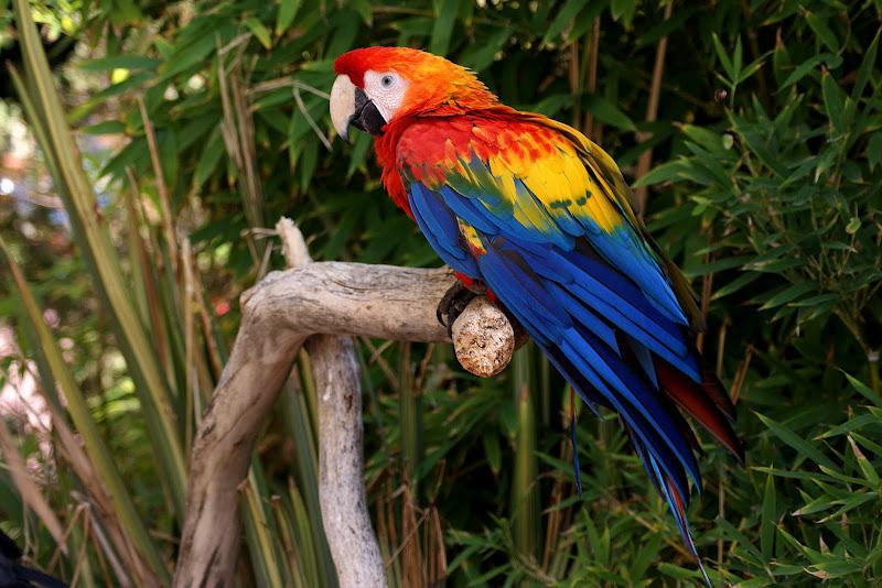 Aves do Zoológico de Lisboa