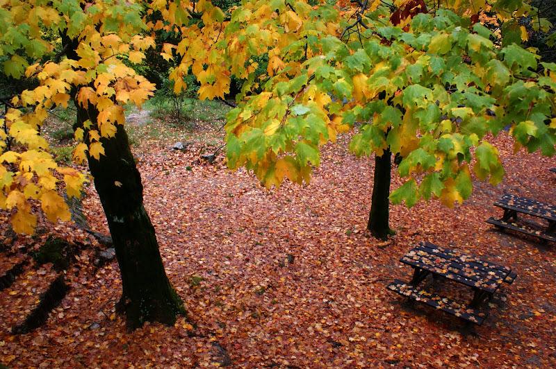 Mesas no Outono