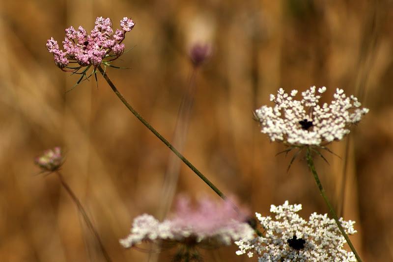 Detalhes do verão, flores do campo