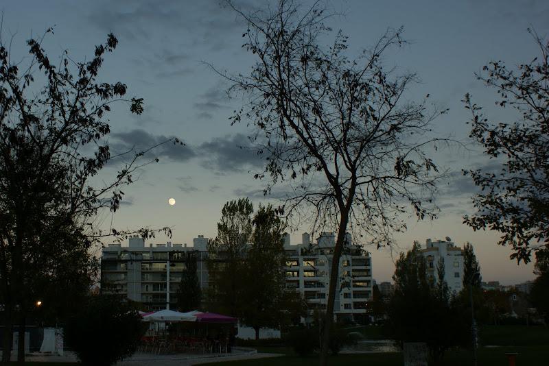 A lua sobre Setúbal, jardim da algodeia