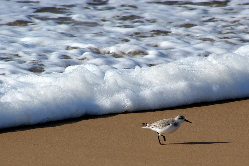 Ave na areia da praia