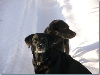 Mango and Purdey in snow