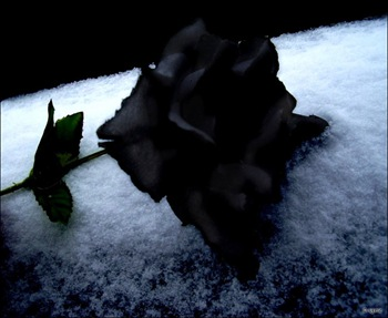 Black_Rose_Immortal_by_DouceAgonie