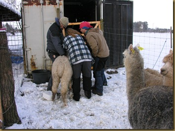 Alex, Nina and Sven-Erik checks one of the girls. The fleece is amazing!