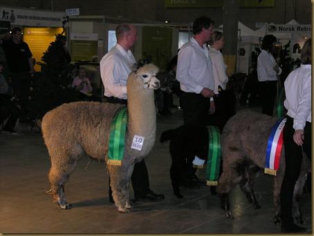 Alpakkautstilling 2010 025