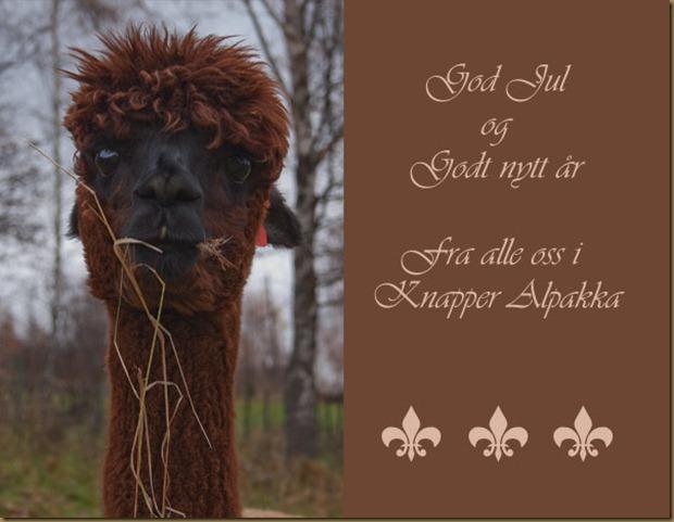 Alpakkaen Wayra ønsker God Jul 2009