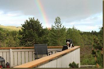 Mus and rainbow