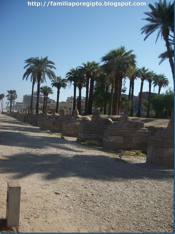 avenida de las esfinges (2)