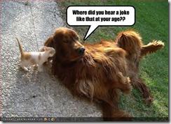 cat-dog-Where didyou hear a joke (Small)