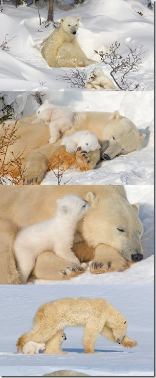 Lovely-Mama-bears