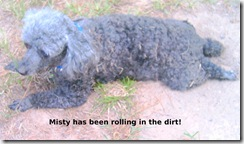 Misty-been-rolling