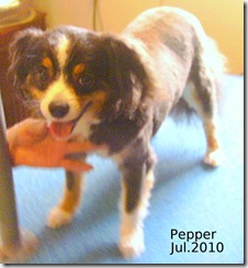 Pepper-Jul-2010-2