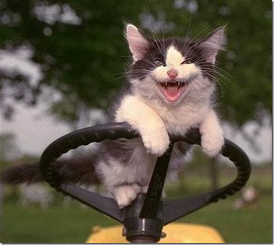 cat-laughing (Small)