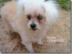 Sheba-12Sep10