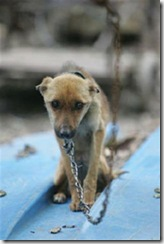 dog-chained-2 (Small)