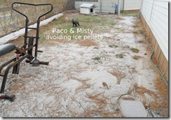 Ice-pellets-Paco-Misty-2.4.11