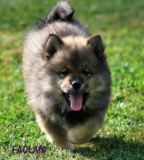 le plus beau chien du monde!!!! 9SE