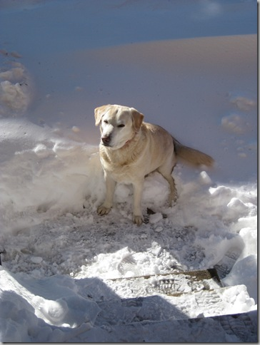connor in a snowbank